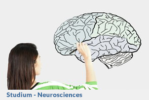 Neuroscience_Studium_Button
